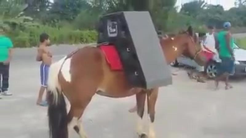 Primul cal cu sistem audio din lume. Animalului chiar ii face placere