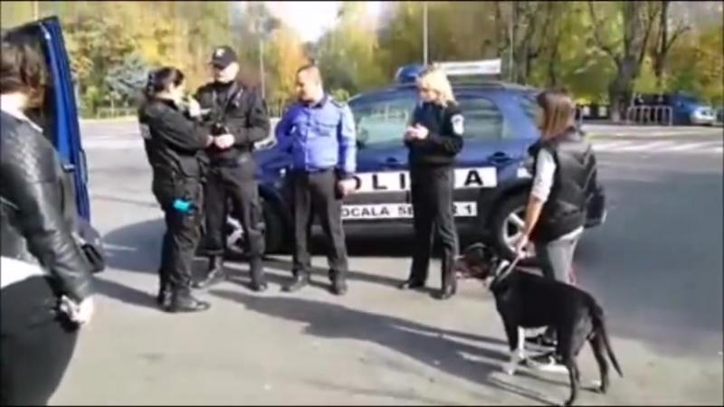 A fost oprita pe strada pentru ca animalului ii lipsea botnita care de altfel era obligatorie. Totul s-a transformat intr-un circ de zile mari. VIDEO