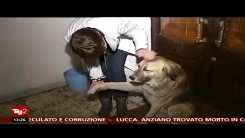 In fiecare zi acest câine intră în curtea CIMITIRULUI şi se aşează pe un mormânt: Când am aflat din ce cauză... am izbucnit în plâns! Nu mai am cuvinte... emoţionant!