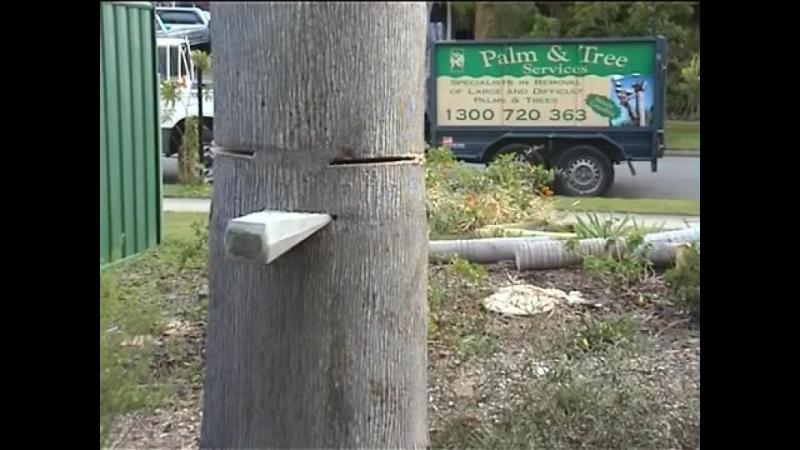 Foloseste o tehnica speciala pentru a dobora acest copac. Desi se afla la doi pasi de case si masini acesta cade exact unde trebuie. Priveste cum se face !