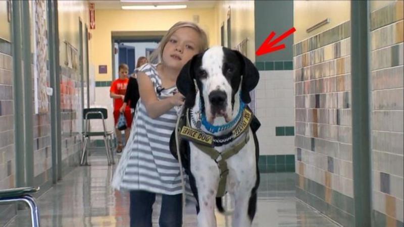 Nu putea să meargă din cauza unei BOLI rare şi periculoase! Dar când această micuţă îl întâlneşte pe acest EROU gigant din viaţa ei... totul se schimbă pentru ea! Ce face câinele pentru viaţa ei... este ca un înger păzitor