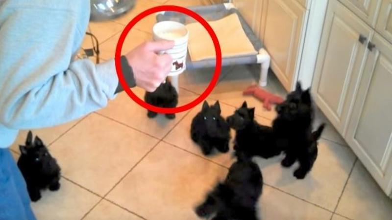 Mămica îi cheamă la masă pe aceşti negri pufoşi: Ce se întâmplă când micuţii se apucă să mănânce... nu mi-a venit să cred cât de ADORABILI sunt! Imi vine să îi mănânc eu pe ei