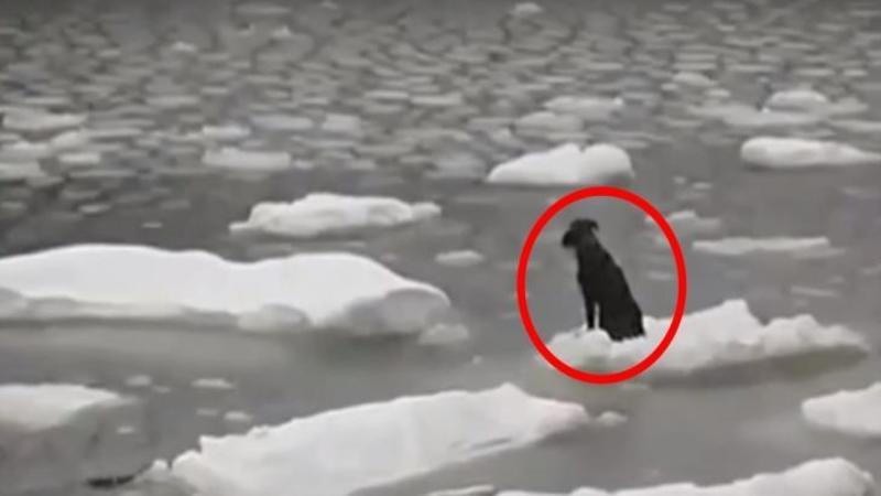 Acest biet câine plutea pe o bucată de gheaţă în mijlocul OCEANULUI îngheţat: Ce se întâmplă câteva minute mai târziu... Dumnezeule cât curaj pe aceşti oameni!