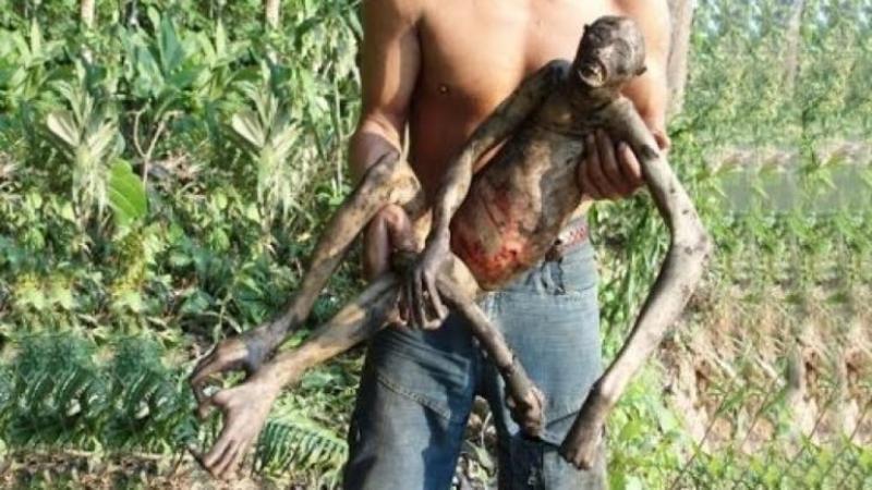 Creatură misterioasă descoperită în jungla Amazoniană! Iată ce au gasit aceşti fermieri într-un tufiş! Nu le-a venit să creadă când au văzut CREATURA moartă care semăna cu un EXTRATERESTRU