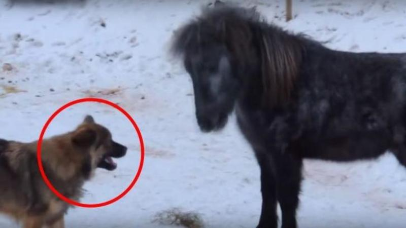 Câinele se apropie timid de căluţ şi face un GEST care m-a lăsat mut de UIMIRE: Când am văzut reacţia calului nu mi-a venit să cred... mi-a atins inima prietenia lor frumoasă!