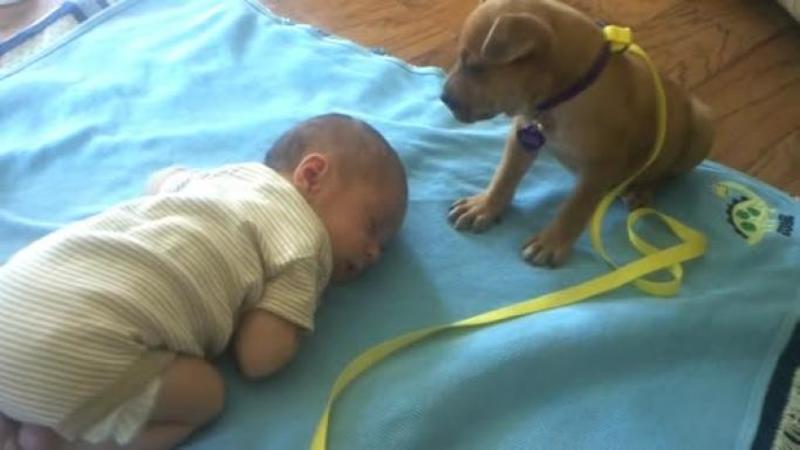 A SALVAT acest mic căţeluş de pe stradă şi la prins lângă copilul său de doar câteva luni: Ce a făcut micuţul suflet speriat lângă bebeluş este de necrezut... încă de pe acum îl apără cu înverşunare