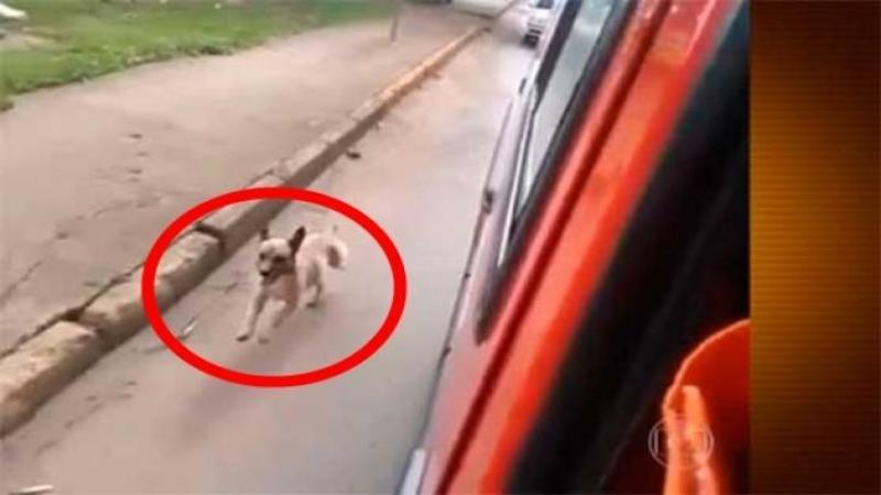Stăpânului îi vine rău şi cheamă SALVAREA pentru a-l duce la SPITAL, dar ce face câinele său i-a lăsat pe medici fără cuvinte! Este atât de DEVOTAT încât urmăreşte salvarea până la spital... INCREDIBIL