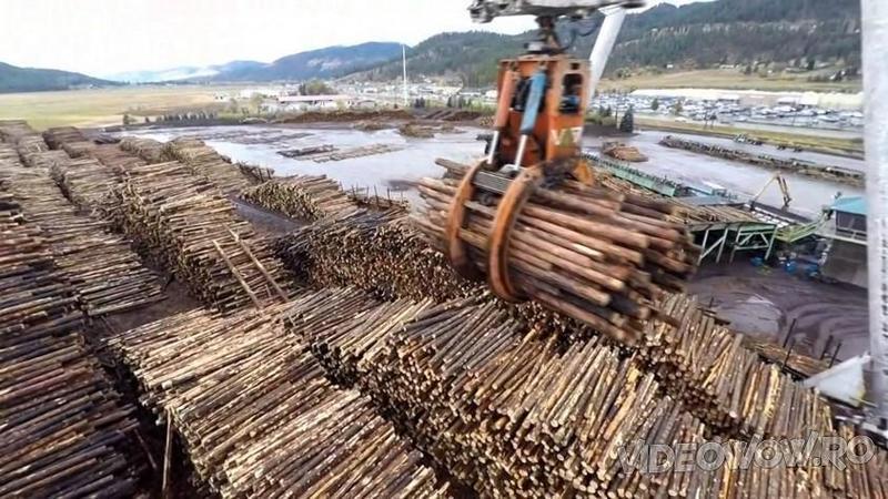 Este unul dintre cele mai mari centre de prelucrare şi distribuire a lemnului şi o singură privire în această fabrică super-tehnologizată te va face să rămâi impresionat!