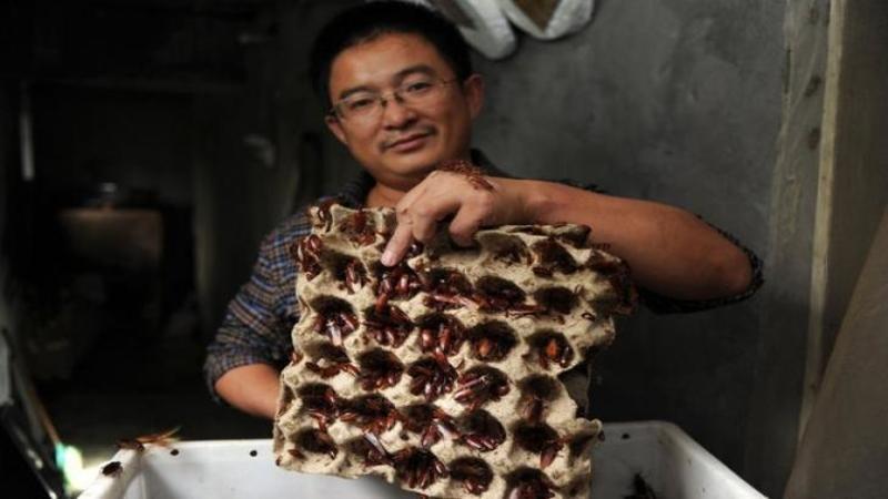 A făcut AVERE din creşterea şi vânzarea gândacilor pe care tu îi striveşti în bucătărie! Un chinez creşte în propria casă milioane de GANDACI pe care apoi îi vinde farmaciilor şi face din acest business milioane de dolari anual!