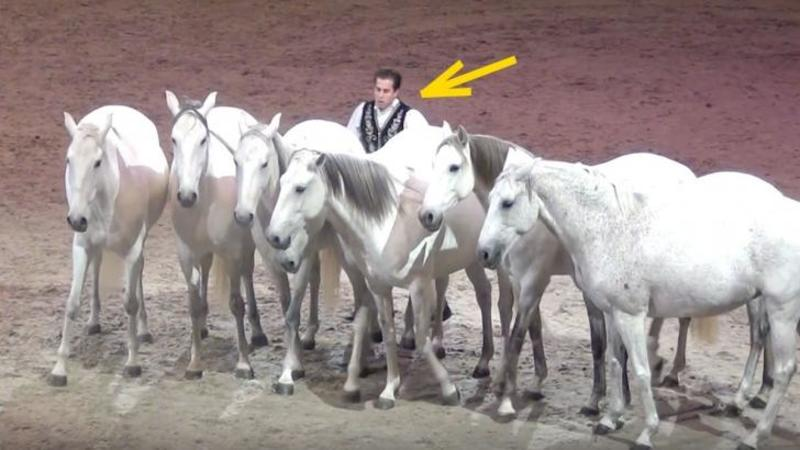 7 căluţi albi şi frumoşi intră în arenă şi se aşează în linie dreaptă: Dar fi atent ce face omul din spatele lor... WOW, gestul lui m-a lăsat cu gura căscată! Cu siguranţă nu ai mai văzut un show atât de captivant... Uimitor