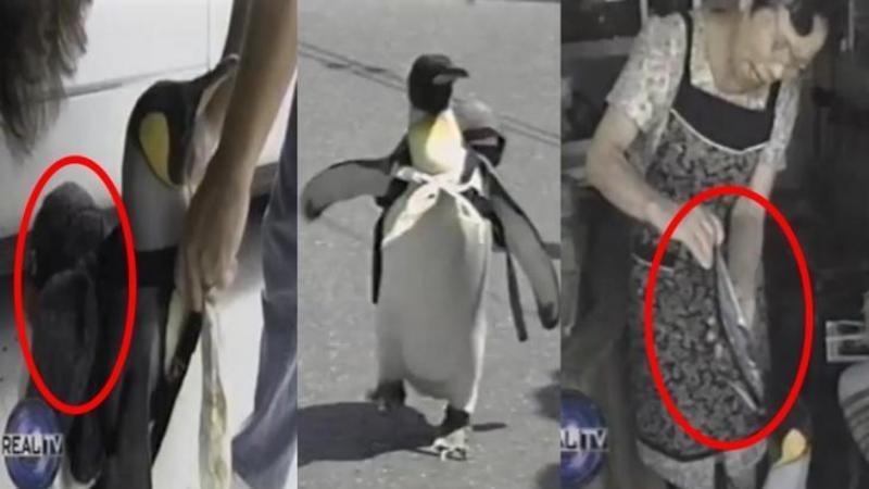Ai crede că este un PINGUIN obişnuit, dar aşteaptă să vezi unde trăieşte şi cu CINE: Nu ai fi crezut să fie animalul de companie perfect... vei rămâne surprins!
