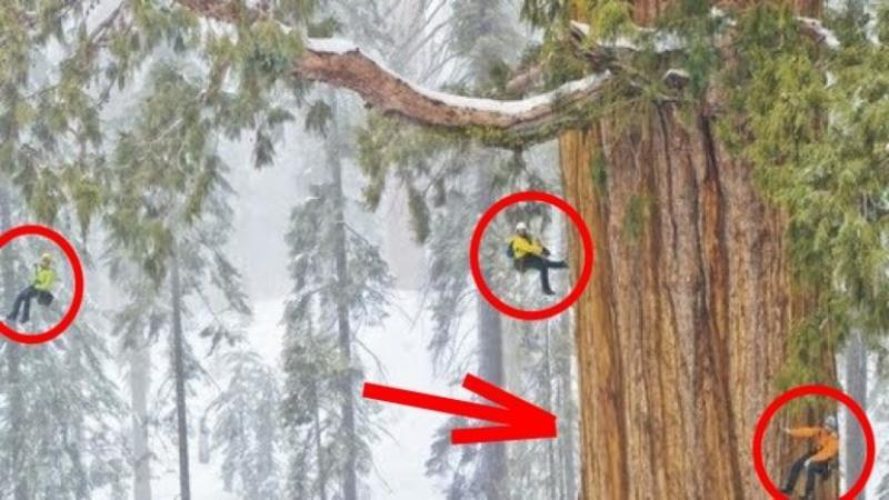 Numele lui este ?Preşedintele? şi are 3200 de ani VECHIME, 83 de metri înălţime şi 8 metri grosime: Este o adevărată MINUNE a naturii şi cu siguranţă merită admirat!