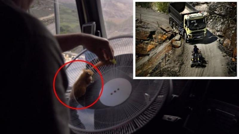 Au pus un HAMSTER la volanul unui CAMION de 15 tone pe un drum extrem de periculos: Ce a ieşit din acest experiment inedit te va lăsa cu gura căscată... WOW