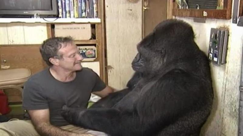 S-au întâlnit din întâmplare şi de atunci au rămas prieteni până când moartea i-a despărţit! Iată momentul în care regretatul actor Robin Williams şi faimoasa gorilă Koko împart câteva momente de afecţiune împreună! Emoţionant