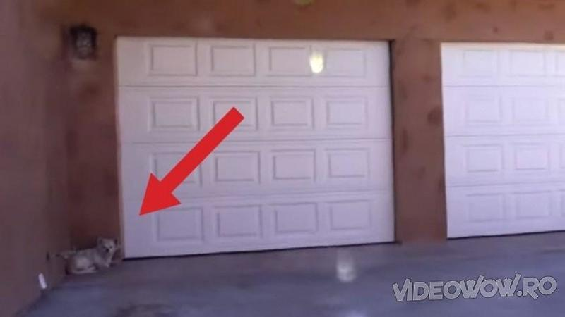A vândut casa şi şi-a părăsit CAINELE chiar în pragul uşii - Ce au găsit salvatorii pe proprietatea abandonată îţi va frânge inima de durere! Un ghemotoc alb plin de iubire şi speranţă