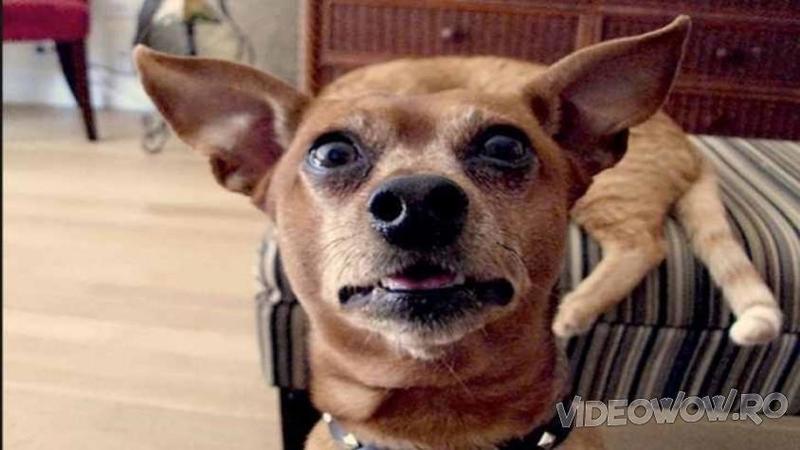 Ii spune câinelui că este timpul pentru băiţă - Stai să vezi reacţia lui ieşită din comun... m-a făcut să cad pe jos de râs!