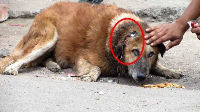 Au zărit acest câine bătrân întins pe marginea şoselei şi s-au apropiat de el: Când au văzut ce s-a întâmplat cu urechea lui... iată ce au decis să facă aceşti îngeri salvatori! Minunat