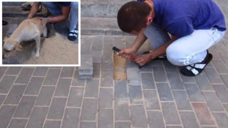 Nu ai să crezi ce a găsit acest om sub pavelele din faţa blocului: Când totul părea fără speranţă uite ce minune şi-a făcut apariţia...