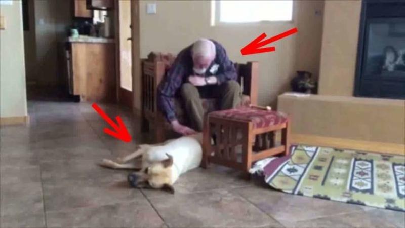 Acest bătrânel simpatic suferă de ALZHEIMER şi din cauza bolii şi-a pierdut capacitatea de a vorbii: Dar ce se întâmplă când câinele familiei se apropie de el... nu îţi va vine să crezi... o MINUNE în adevăratul sens al cuvântului!