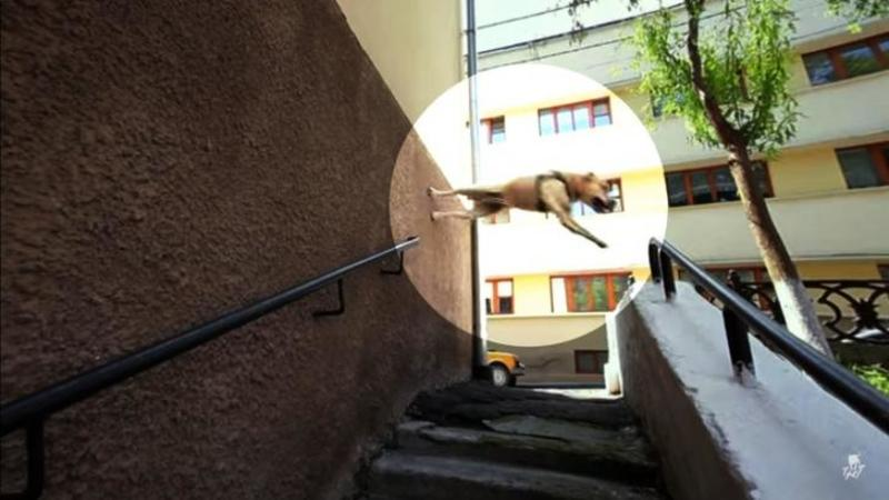 Când am văzut câinele că se urcă pe PERETE şi sare am zis că nu văd bine, dar ce se întâmplă în continuare m-a lăsat efectiv mut de admiraţie! Uite aici acrobaţii canine extraordinare... WOW