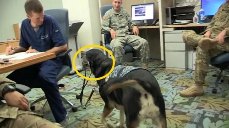 Acest câine intră cu LESA în gură în camera plină de soldaţi dintr-un motiv special: Când ai să vezi ce le face acestor băieţi nu îţi va vine să crezi... WOW