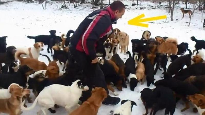 Acest om este înconjurat şi ?AGRESAT? de 450 de câini maidanezi: Când ai să vezi adevăratul motivul pentru care ei fac lucrul ăsta vei fi impresionat până la lacrimi!