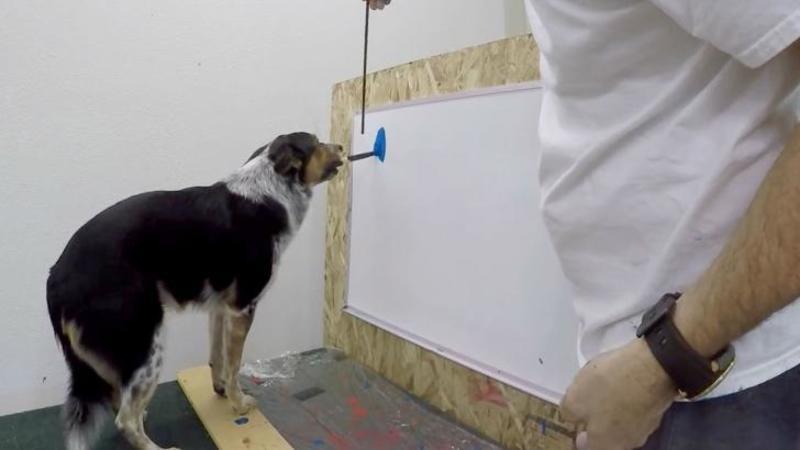 Nimeni nu l-a crezut când a spus că, câinele lui poate să PICTEZE, dar când a luat camera de filmat şi a înregistrat totul... WOW, mai că nu mi-a venit să cred ce văd!