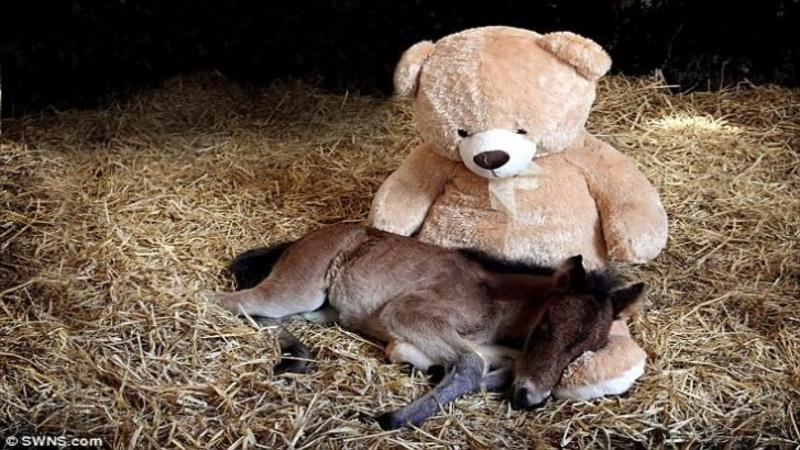 Abandonat de mama lui la doar 2 zile de la naştere acest micuţ are parte de o mare surpriză! Când vei vedea ce face cu ursuleţul de pluş îţi va topii inima...