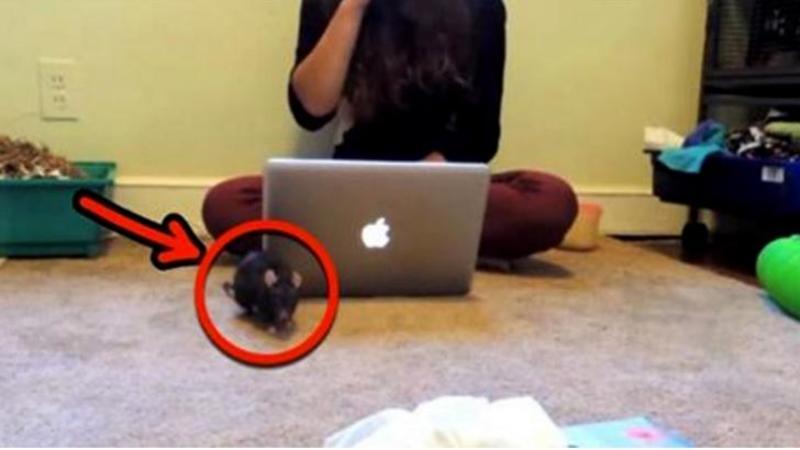 Un SOBOLAN mare cade de pe tavan direct în capul acestei fete care stătea la calculator: Ce face când îl vede... m-a dat pe spate! Reacţia ei este una... neaşteptată!