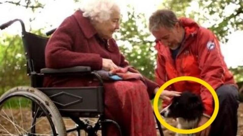Această femeie în vârstă de 79 de ani s-a PIERDUT în pădure timp de 3 zile şi a fost la un pas de MOARTE dacă nu era acest câine care i-a salvat viaţa chiar atunci când vroia să renunţe la ea! Emoţionant