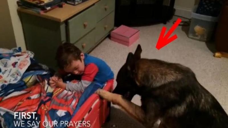 Câinele familiei se apropie de micuţul copilaş care îşi făcea RUGACIUNEA de seară lângă pat: Ce se întâmplă când ajunge lângă el m-a lăsat fără cuvinte, este pur şi simplu ADORABIL!