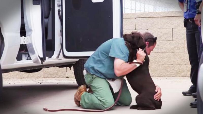 Au găsit 526 de câini abandonaţi într-o pădure lăsaţi să moară de FOAME în cuşti: Dar priviţi ce se întâmplă după 1 an de la SALVAREA lor... mi-au dat lacrimile!