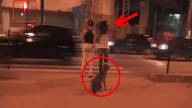 Fi atent la 3 lucruri din acest video: La FETE, la semafor şi la câinele de lângă ele! Ce se întâmplă după câteva minute nu mi-a venit să cred!
