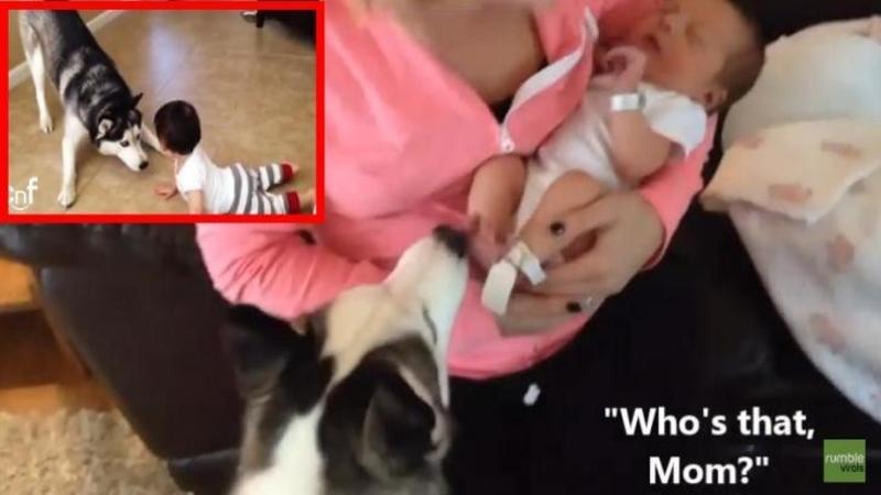 Si-a adus nou-născutul de la maternitate şi i-a fost frică de câinele său, dar nu i-a venit să creadă ce face când şi-a văzut noul stăpân... iată ce reacţie a putut să aibe!! Incredibil
