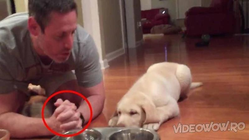 Ii pune micuţului câteva boabe în castron şi se întinde cu el pe jos: Ce se întâmplă înainte de a lăsa câinele să mănânce m-a lăsat cu gura căscată! WOW