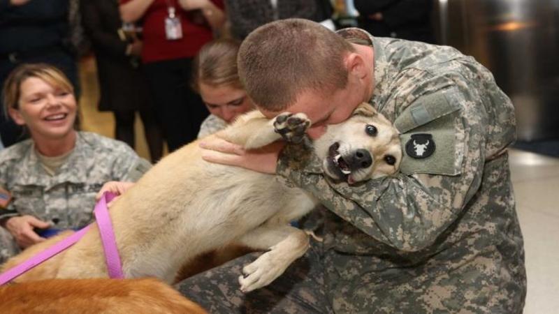 Emoţionant - Acest câine îşi vede stăpânul după 6 luni de absenţă: Bucuria lui este atât de mare încât abia mai respiră şi PLANGE ca un COPIL!!