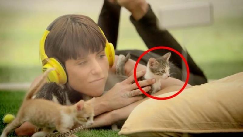 Au creat o oază de LINISTE chiar în mijlocul unui oraş aglomerat: Ce au găsit oamenii acolo este dea dreptul GROZAV - O terapie de linişte şi bucurie cu aceste pisicuţe ADORABILE
