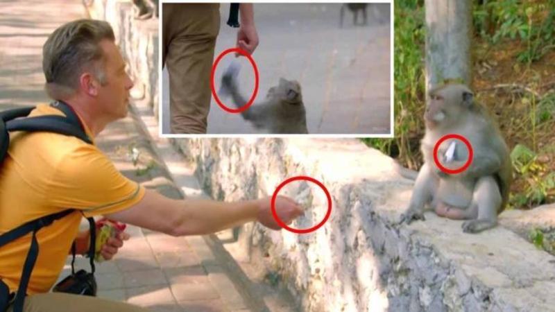 Acest om este constrâns de împrejurări şi obligat să îi dea unei maimuţe un OU fiert: Motivul pentru care face acest lucru... nu îl credeai pentru nimic în lume!