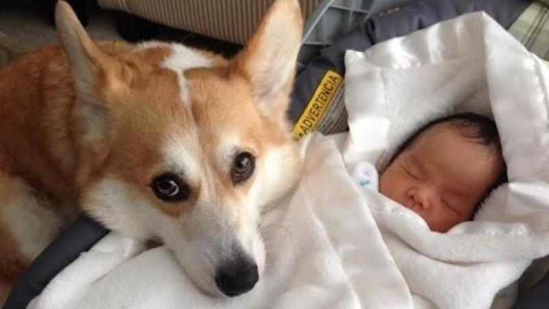 Si-a pus boticul pe bebeluşul care dormea şi nici în ruptul capului nu a mai lăsat pe cineva să se atingă de el: Ce fac aceste suflete pentru mici lor stăpâni abia născuţi este fantastic - Un video pe care nu trebuie să îl ratezi