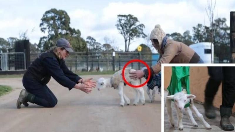 Acest micuţ MIEL nu poate să stea în picioare... dar ce fac oamenii din acest centru pentru animalele cu probleme este extraordinar de frumos! Iată ce devotament şi iubire pot să aibe pentru animalele bolnave...