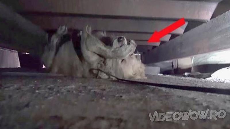 Au găsit acest câine sub o casă părăsită şi în momentul în care au vrut să îl SALVEZE a avut un ATAC de panică, ce s-a întâmplat după câteva minute... este cu adevărat emoţionant!