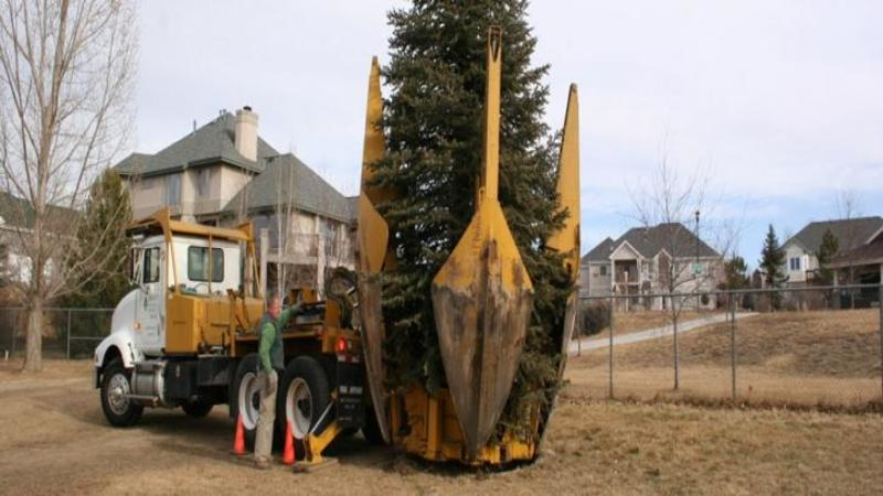 Iată ce face această fantastică maşinărie cu un COPAC imens... De necrezut! Incredibila autoutilitară care poate muta o pădure întreagă fără să TAIE nici măcar o creangă!