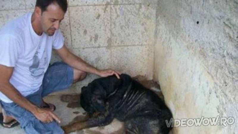 Işi aştepta îngerul morţii să îl i-a la ceruri, dar când acest om se apropie de micuţul câine... Dumnezeule, uite ce miracol se întâmpla cu el!