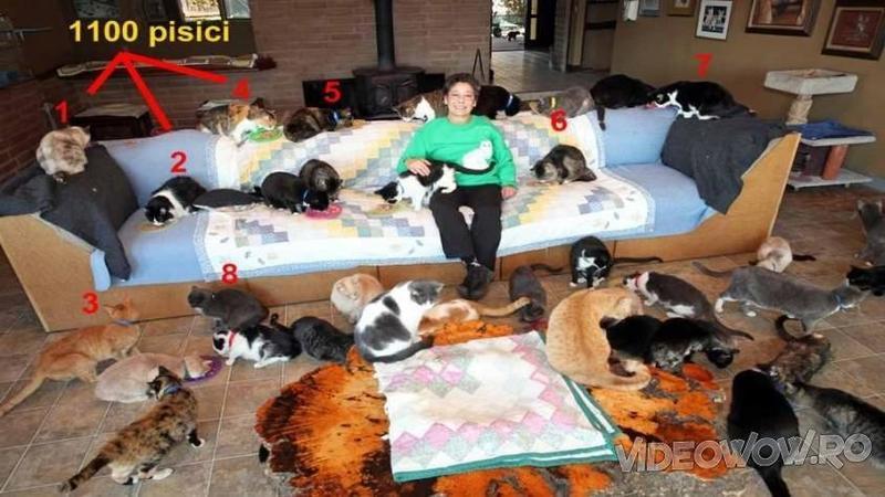 Are 67 de ani, o casă cu 5 dormitoare şi... 1100 de pisici în total: Când ai să vezi cum îşi împarte această femeie casa cu 1100 de sufleţele vei rămâne cu gura căscată... o adevărată aventură!