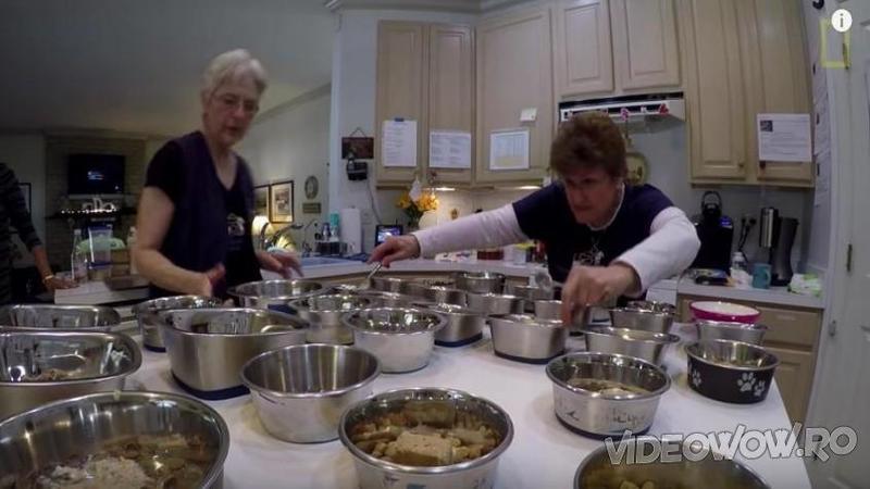 In fiecare zi această femeie pregăteşte o cină delicioasă pentru invitaţii ei pretenşioşi! Când ai să vezi despre cine este vorba vei rămâne fără cuvinte de laudă!