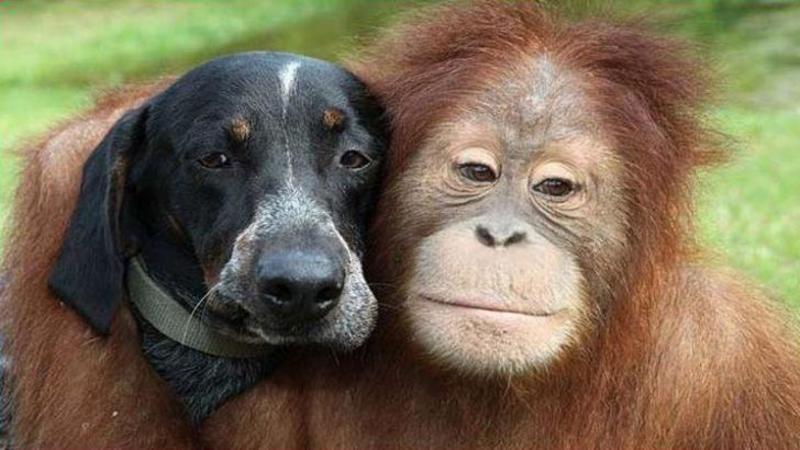 Prieteni pe viaţă - Sunt total diferiţi şi cu comportamente diferite, dar cu toate astea, ei au rupt graniţele prieteniei şi sunt unul lângă celălalt şi la bine şi la rău
