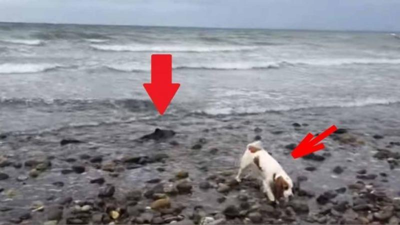 Câinele său observă ceva STRANIU pe plajă: Când stăpânul se apropie de bizara CREATURA... Dumnezeule nu mi-a venit să cred ce văd!
