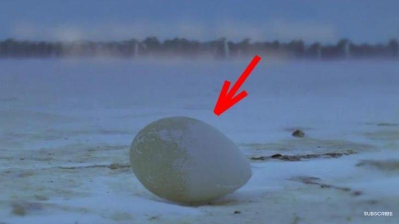Au găsit un OU pe jos la -30 de grade: Ce a ieşit din el în aceste condiţii vitrege este o MINUNE mică a naturii! Tot ce pot să spun este WOW