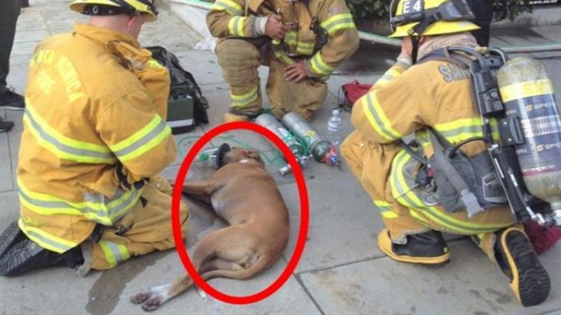 Dumnezeule mare, când am văzut ce cărau în braţe aceşti CURAJOSI pompieri mi-a stat inima în loc! Ce au făcut pentru a SALVA viaţa acestor biete suflete aflate în agonie este INIMAGINABIL! Iată cât curaj şi dăruire chiar şi pentru nişte animale