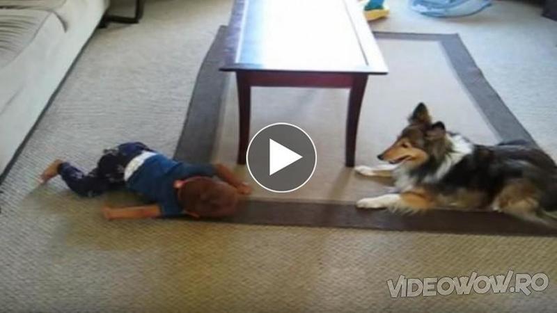 Câinele se aşează lângă acest micuţ şi îl priveşte în ochi, după câteva secunde nu mi-a venit să cred ce face: Dacă mai ai vreun dubiu de importanţa unui animal în viaţa copilului tău atunci urmăreşte acest video...